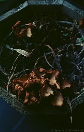 Shroomscapes (original)